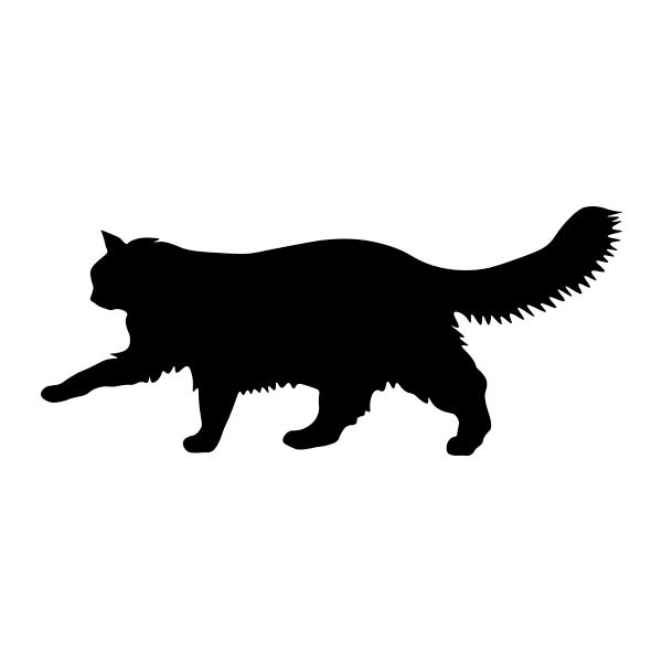 Cat, Long Hair