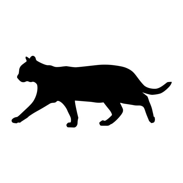 Cat, Short Hair